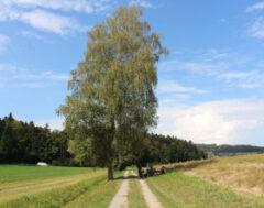 Von Uettligen Dorf nach Meikirch