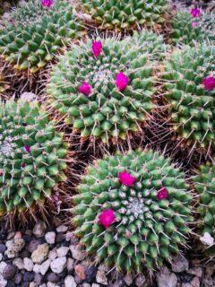 Vom Marzili in den Botanischen Garten (BOGA)