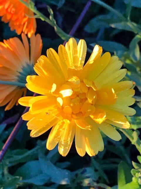 Unsere Blumenwelt